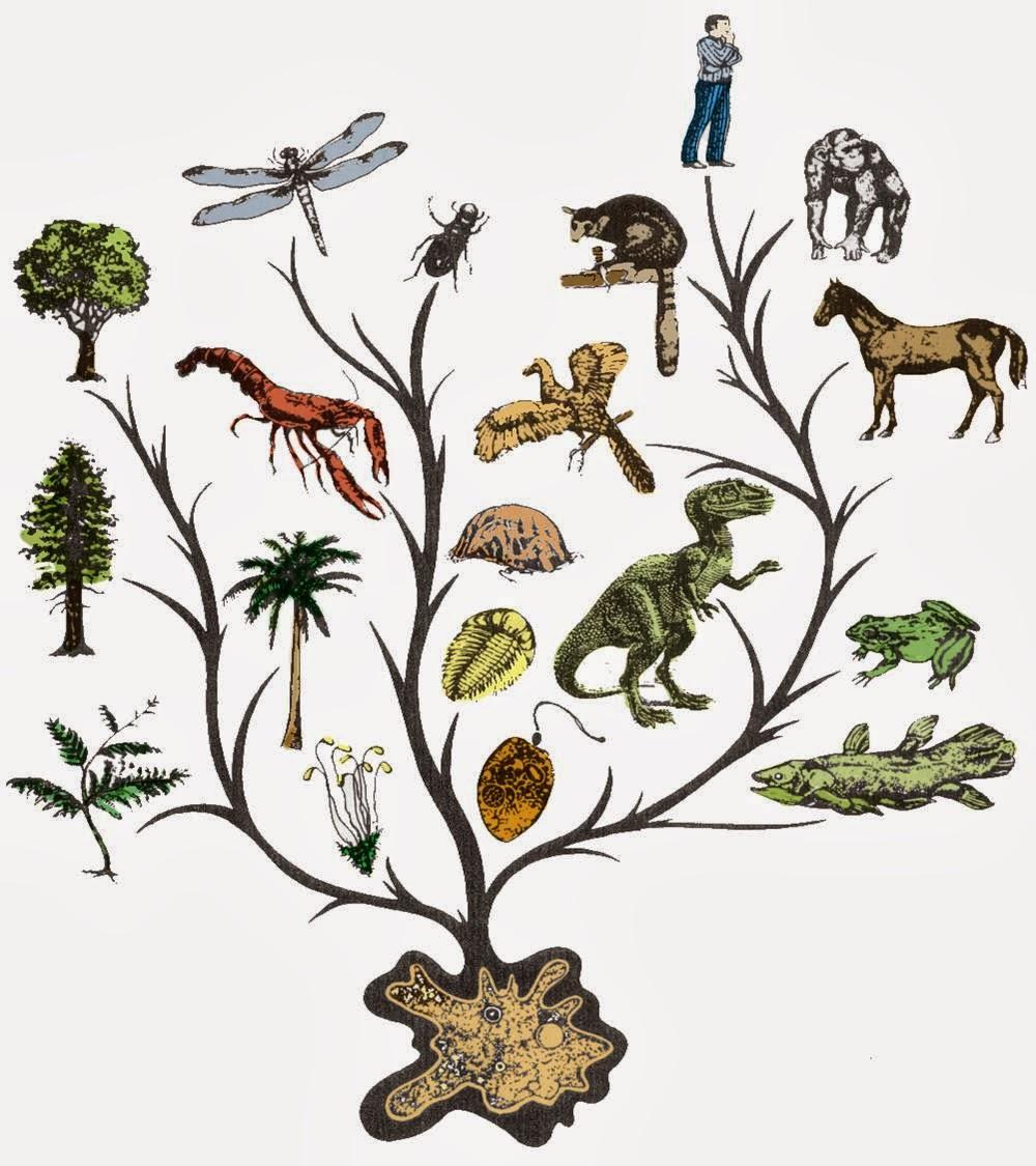 evolution of animals - HD1000×1125